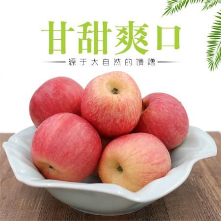 烟台栖霞红富士苹果·5斤装